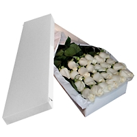 Caja 24 Rosas Blancas