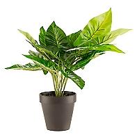 Arbusto Core Plantas