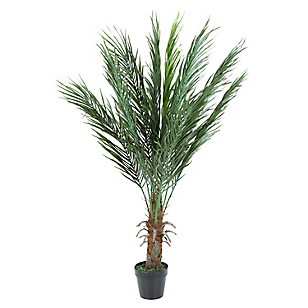 Dw-Arbusto Palmas Phenix 90Cms