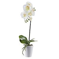 Maceta Orquidea Core Plantas