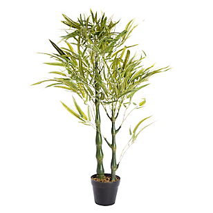 Ficus Bamboo