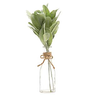 Plantas con Florero Core