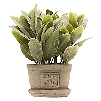 Arbusto con Pote Core
