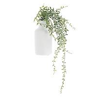 Enredadera Core Plantas