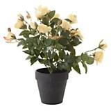 Planta rosas 32 cm