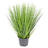 Planta onion verde 62 cm