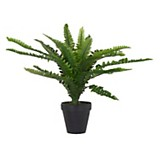 Plantín Helecho 45 cm
