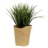Plantín grass 22 cm