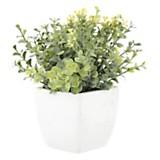 Plantín 16 cm