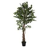 Plantín 180 cm
