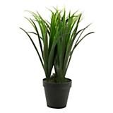 Plantín 56 cm