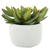 Plantín suculenta 23 cm