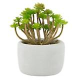 Plantín 23 cm