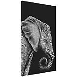 Cuadro Elefante Negro