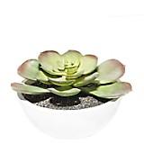 Planta Cactus con Maceta Mix 11 cm