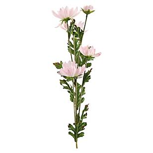 Flor Daisy Rosada