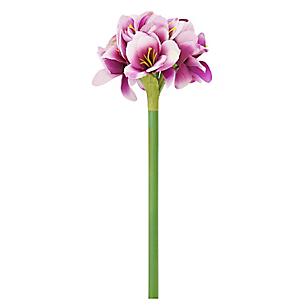 Flor Amarylilis Morada