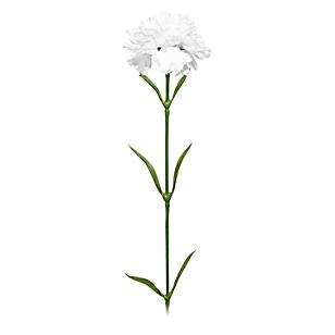 Flor Carnation Blanca