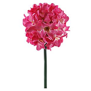 Flor Allium Med Rose