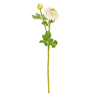 Flor Ranunculus Yvory