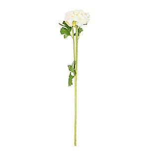 Flor Ranunculus Blanca