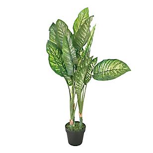 Planta Hojas Bicolor Maceta 100 cm