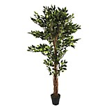 Planta Árbol Ficus Maceta 170 cm