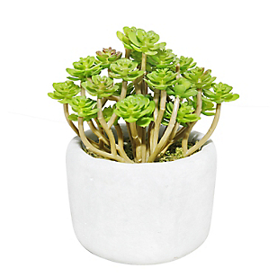 Planta Cactus con Maceta 15 cm