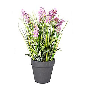 Planta Lavanda Maceta 28 cm