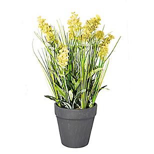 Planta Lavanda Grass Maceta 28 cm