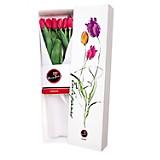 Caja Nueva Edición + 6 Tulipanes