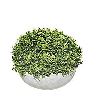 Planta Maceta Red 20cm Fhbn