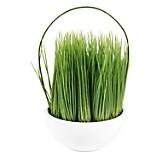 Planta Malt Grass 18 cm