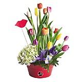 Lata con 15 Tulipanes de Colores