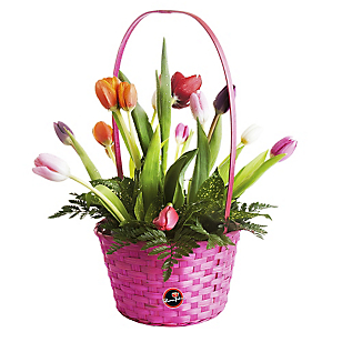 Canasta con 12 Tulipanes