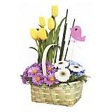 Canasta con 5 Tulipanes