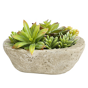 Planta Succulenta 19cm