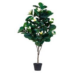 Planta Magnolio