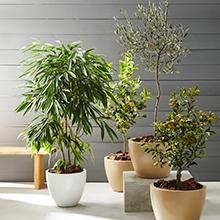 plantas-naturales