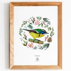 BENDITO - Cuadro Aves de Chile  Sietecolores