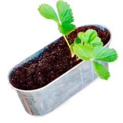 BRANDO - Huerta Kit De Cultivo Frutilla Macetero