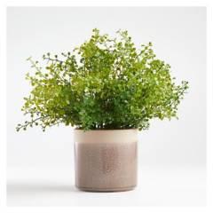 CRATE & BARREL - Maceteros con vegetacion