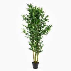 Planta Grande