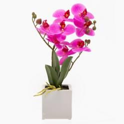 Planta Mundo Orquideas
