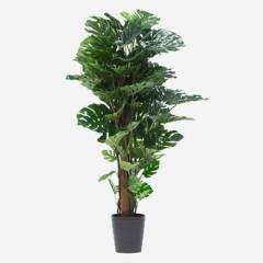 MICA - Planta Monstera 150cm