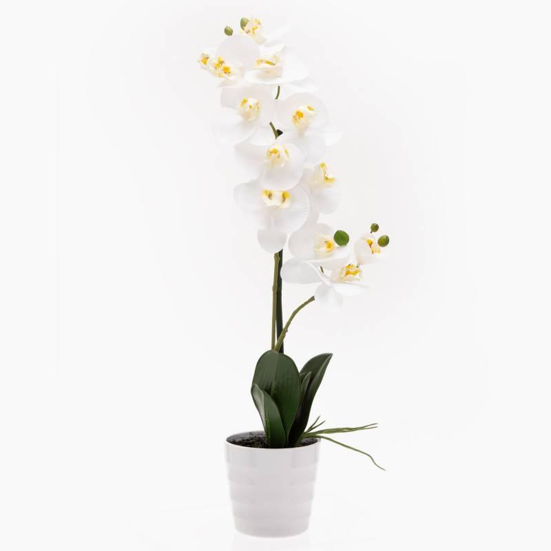 Mica - Orquídea Blanca 51 cm