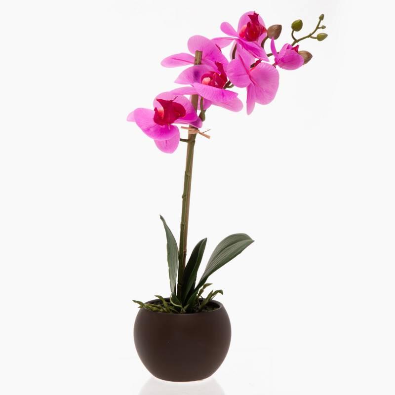 Mica Planta Mundo Orquideas Falabella Com Este es un blog para enseñaros mis orquideas, sus floraciones, las nuevas adquisiciones, y sobre. mica decorations