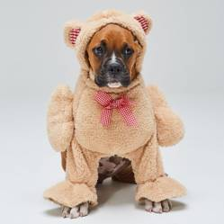 Yamp - Disfraz Mascota Perro Teddy
