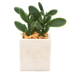 Mica - Planta suculenta sintética 9x5x5cm