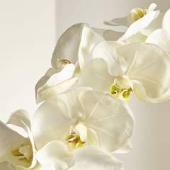 Crate & Barrel - Rama de Orquídea Blanca